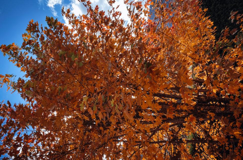L'automne : la saison de la déco et de l'encadrement des photos